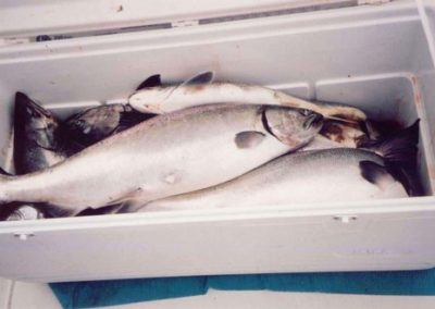 fish18.sized